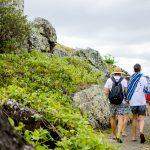 Ways to Awaken Your Creativity among Natural Surroundings